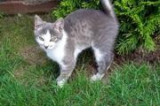 Ласковый котенок ищет хозяина!