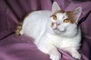 Ласковый котик Антошка в дар