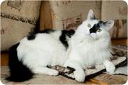 Ёкас - кот-мечта