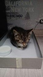 Ищет дом котёнок! Был найден под дождём. Симпатичный маленький Василий