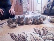 Котята 1 мес. Здоровы. Мальчики и девочки,  очень красивые и веселые ма