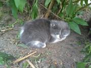 Чудесный котенок (предположительно девочка) ищет СРОЧНО ДОМ ИЛИ ПЕРЕДЕ
