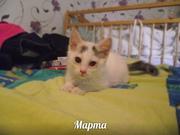 Малышка Марта ищет ДОМ!  Маленький пушистый мягкий комочек,  полный эне