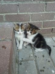 Отдаются два котенка с предприятия. Мальчик и девочка. Мальчик более с