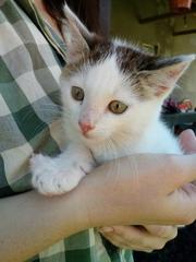 Маленький котеныш ищет ДОМ!  Найден на даче,  пришел сам за помощью. На