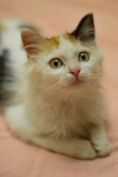 Комочек счастья- котенок Мика в дар