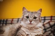 Кошечка Эбби в дар