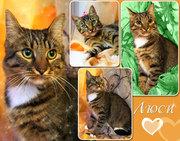 Люси – крупная кошка-рысь с зелеными глазами в дар!