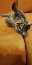 Котик Пуська ищет дом!
