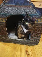 Кошечке Розе нужен дом